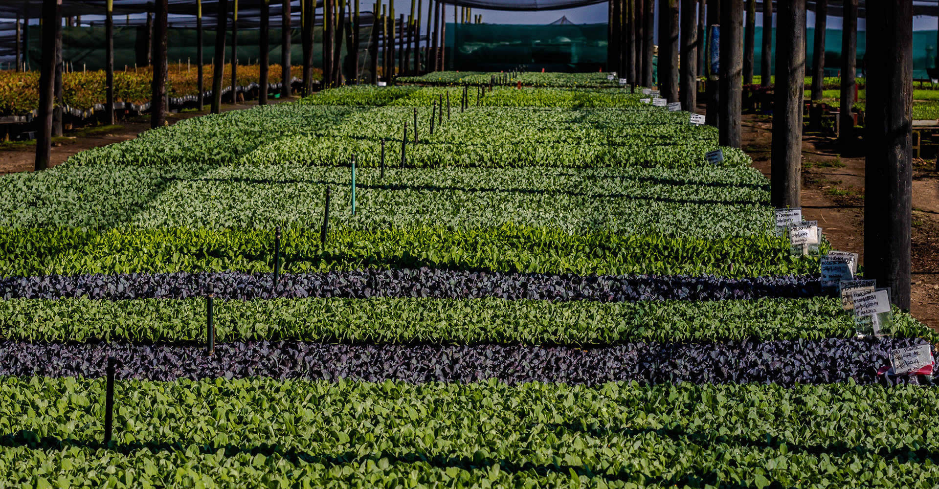 Sunshine Seedling Services - Vegetable Seedling Nursery - Pietermaritsburg, South Africa