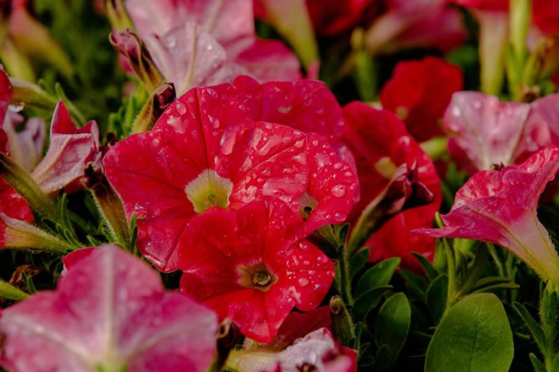 Flower Seedling Nursery - Pietermaritsburg, South Africa